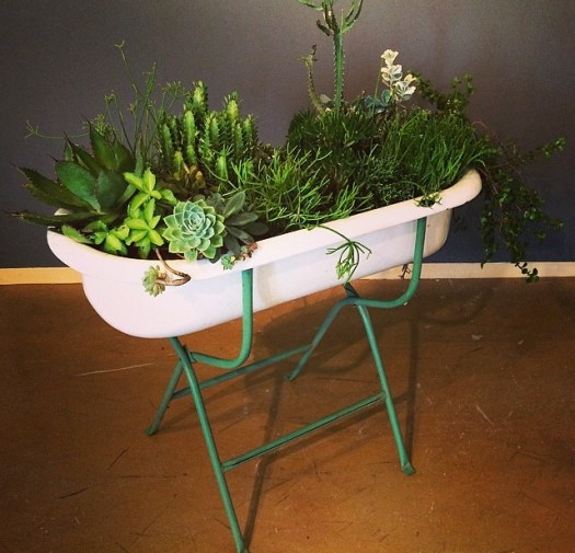 "Vernon Caldera, ""Houston"", 2014, Succulents, bathtub"