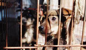 adozione cane canile
