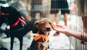 adozione cane canile - cose da sapere
