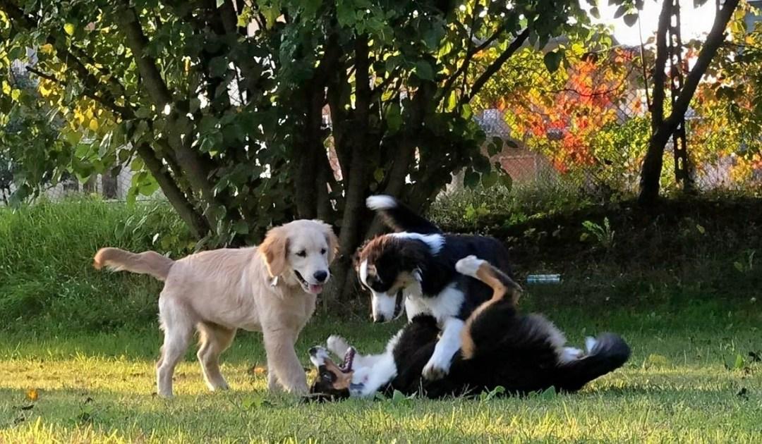 veronadogs - socializzazione tra cuccioli
