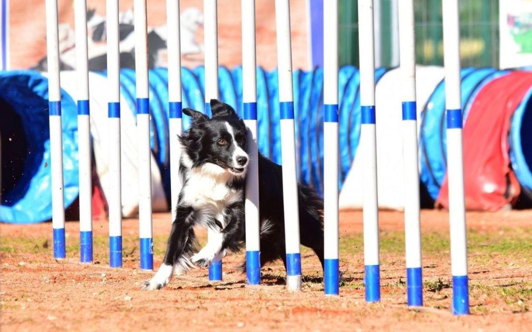 Agility Dog: cos'è e quali sono i suoi benefici