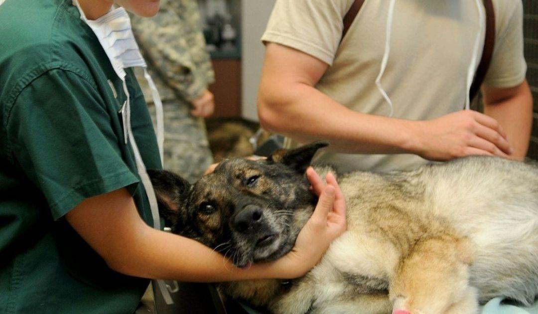 veronadogs - un cane dal veterinario