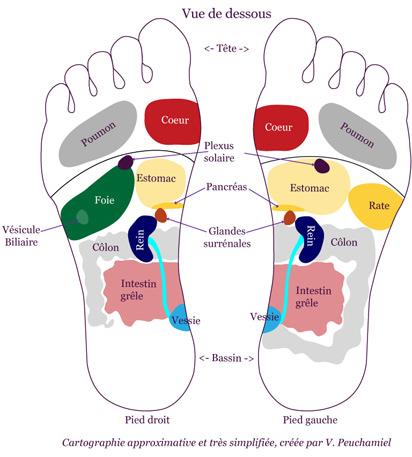 cartographie_pieds