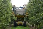 Poolse arbeiders aan het werk in de boomgaard
