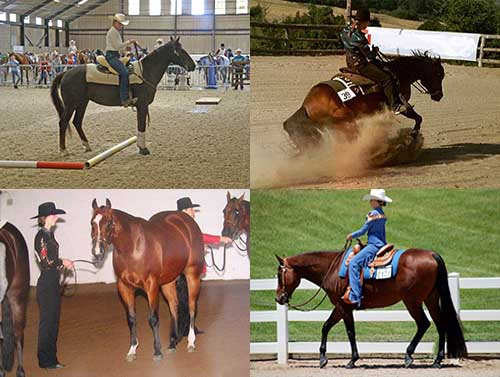 Show Horse collage