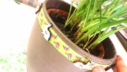 Osterdeko DIY: Hasenknöpfe auf Webband