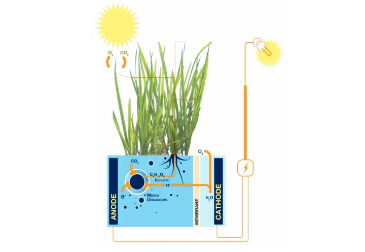 Dutch company Plant-e generates electricity from living plants 2