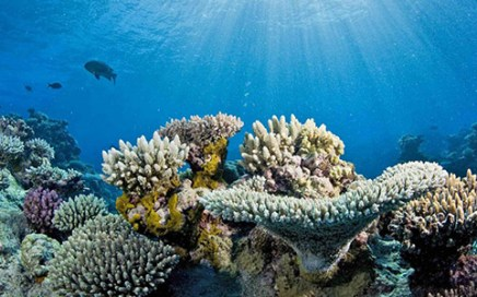 Great Barrier Reef may decline to 10 percent due to warming
