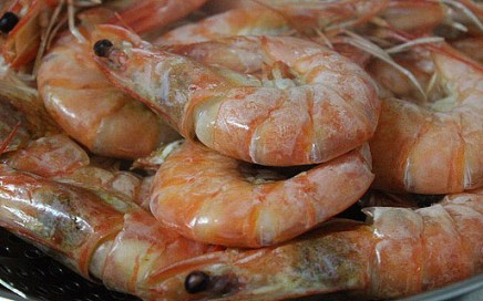 Shrimp shells open possibility for cheaper solar cells
