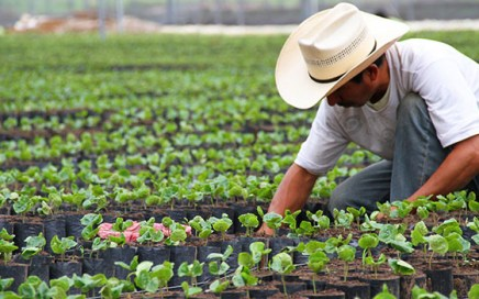 Starbucks Mexico donates high-yielding coffee plants to Chiapas farmers