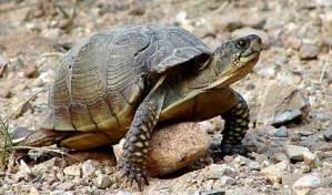 Brave little tortoise Story