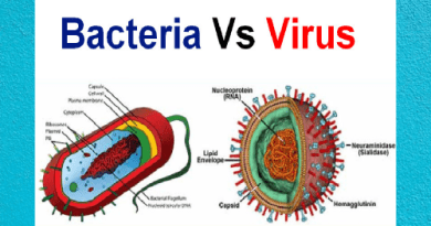 difference between bacteria and virus in hindi difference between bacteria and virus structure difference between bacteria and virus in english difference between bacteria and virus quora difference between bacteria and virus pdf difference between bacteria and virus upsc difference between bacteria and virus ppt difference between bacteria and virus biology difference between bacterial and a viral infection difference between bacteria and virus and fungi difference between bacteria and virus and germs distinguish between a bacteria and a virus difference between a bacterial and viral chest infection difference between a bacterial and viral throat infection differences between bacteria and viruses fungi and parasites the difference between bacteria and virus structure the difference between bacteria virus and fungi the difference between bacterial and viral infections the difference between bacterial and viral meningitis the difference between bacterial and viral tonsillitis the difference between bacterial and viral pink eye the difference between bacterial and viral conjunctivitis the difference between bacterial and viral chest infection difference between bacterial and viral bronchitis difference between bacteria and virus in bengali difference between bacteria and virus cells difference between bacteria and virus cdc difference between bacteria and virus chart difference between bacteria and virus class 8 difference between bacterial and viral conjunctivitis difference between bacterial and viral cold difference of bacterial and viral conjunctivitis difference between bacterial and viral meningitis csf c diff bacteria or virus difference between bacterial and viral diseases difference between bacterial and viral diarrhea differences between bacteria and viruses venn diagram bacteria vs virus differences differentiate between virus and bacteria 5 difference between virus and bacteria difference between bacterial and viral eye infection difference between bacterial and viral ear infection difference between bacterial and viral pink eye difference between bacterial and viral fever difference between bacteria virus and fungi difference between bacterial viral and fungal corneal ulcer difference between bacterial viral and fungal pneumonia difference between bacterial viral and fungal meningitis difference between bacterial viral and fungal diseases difference between bacteria and virus fungi and parasites difference between bacteria and virus in tabular form difference between bacteria and virus gcse difference between bacteria and virus genetic material difference between bacterial and viral gastroenteritis difference between bacteria virus and germs difference between bacteria and virus in structure difference between viruses and bacteria differences between viruses and bacteria difference bacteria vs virus difference between bacteria and virus ks3 difference between bacterial and viral keratitis difference between bacteria and virus in kannada difference between bacterial viral and fungal keratitis difference between bacterial and viral laryngitis difference between bacterial and viral lung infection differences between bacteria and viruses a level 3 differences between virus and bacteria 3 differences between viruses and bacteria difference between bacteria and virus microbiology difference between bacterial and viral meningitis difference between bacteria and virus in malayalam difference between animal and bacterial virus multiplication difference between bacterial viral and tuberculous meningitis major difference between bacteria and virus main difference between virus and bacteria microbe vs bacteria vs virus difference between bacteria and virus difference between bacterial and viral infection of the eye difference between bacteria and virus plague inc difference between bacterial and viral pneumonia difference between bacterial and viral pharyngitis difference between bacterial and viral pneumonia symptoms difference between bacterial and viral pneumonia on an x-ray difference between bacteria and virus quizlet what are two differences between bacteria and viruses quizlet difference between bacteria and virus reproduction difference between bacterial and viral rhinitis difference between bacterial and viral rash difference between bacterial and viral upper respiratory infection difference between bacteria and virus slideshare difference between bacteria and virus size difference between bacteria and virus sore throat difference between bacterial and viral sinus infection difference between bacterial and viral sore throat difference between bacterial and viral sti difference between bacterial and viral stds 3 differences between bacteria and viruses difference between bacteria and virus table difference between bacteria and virus tonsillitis difference between bacterial and viral tonsillitis difference between bacterial and viral throat infection differences between fungi bacteria and viruses table the difference between bacteria and virus the difference between virus and bacteria the differences between virus and bacteria the difference between viruses and bacteria difference between bacterial and viral corneal ulcer difference between bacterial pneumonia and viral pneumonia using gram stain differences between virus and bacteria difference between virus and bacteria cells difference between.virus and bacteria difference between virus and bacterial write difference between bacteria and virus whats difference between bacterial and viral infection difference between bacteria virus 10 difference between bacteria and virus 2 difference between bacteria and virus what are two (2) differences between bacteria and viruses 3 difference between bacteria and virus 3 major differences between bacteria and viruses state 3 differences between bacteria and viruses 4 differences between bacteria and viruses 5 difference between bacteria and virus