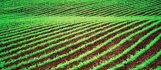 Freins à la captation du carbone par les sols : urgence de l'initiative 4 pour mille Un article INRA
