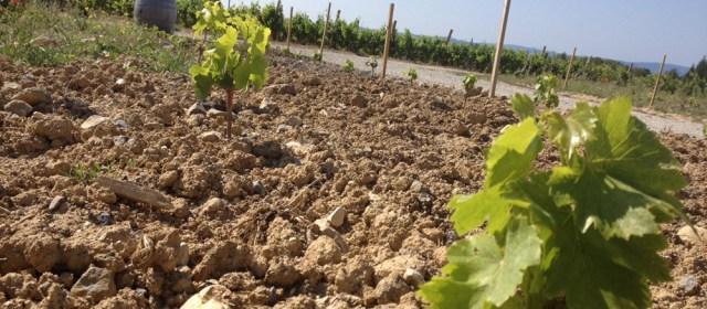 Enherbement et Viticulture