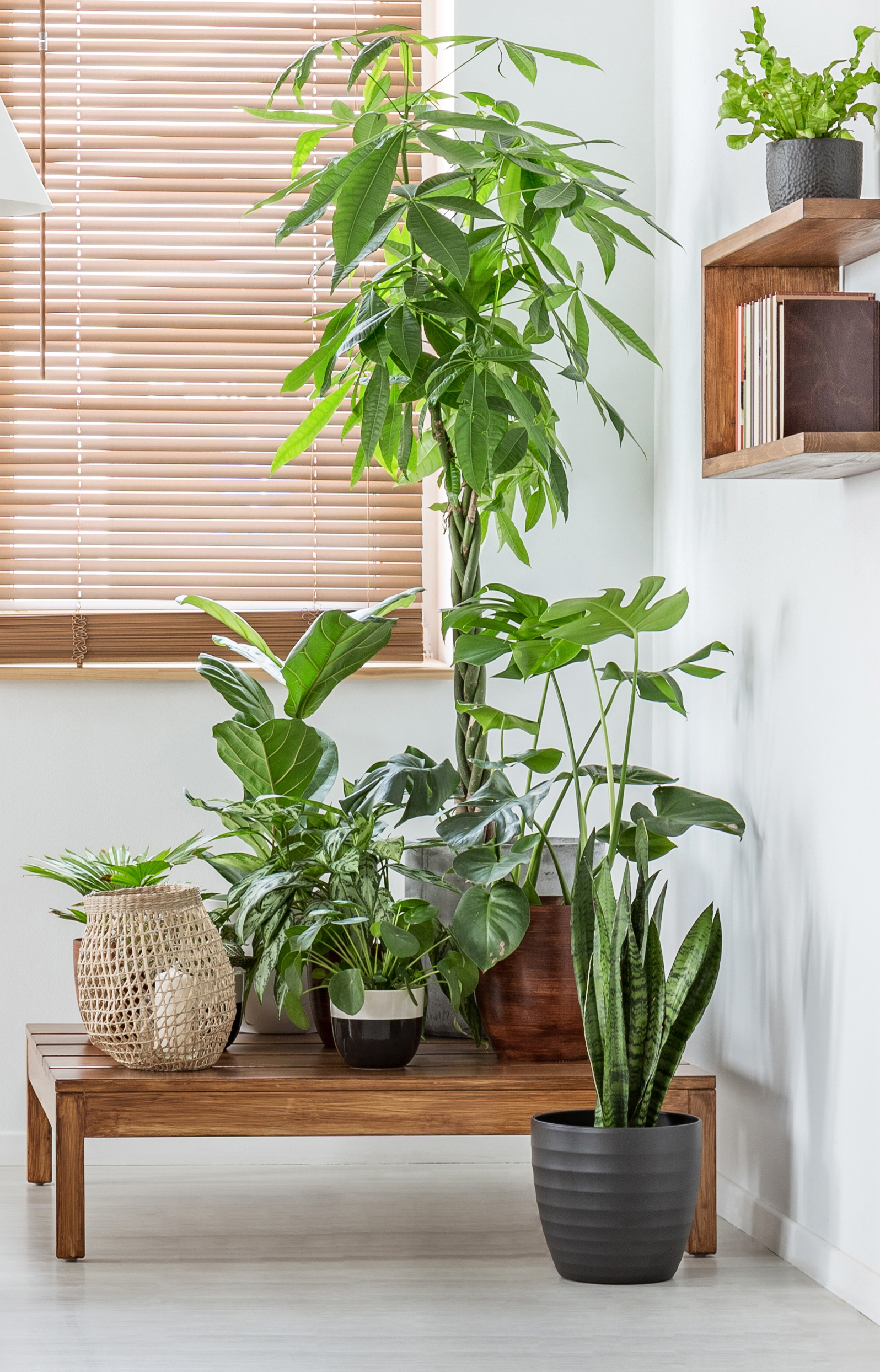 Top 20 Indoor Plants   Kings Plant Barn   Verve Magazine
