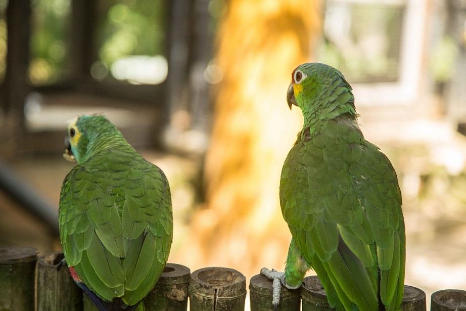 A Walk Inside Mumbai's First Interactive Bird Park | Verve