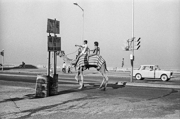 Camel On Marine Drive