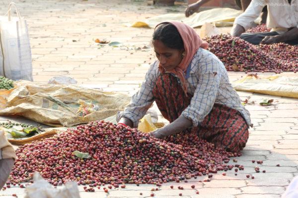 Harvest Sorting