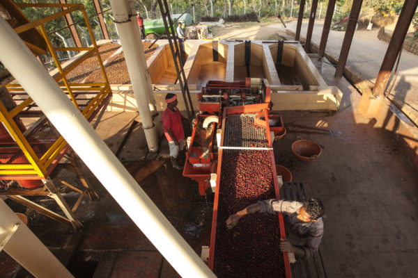 Pulping or Wet Processing