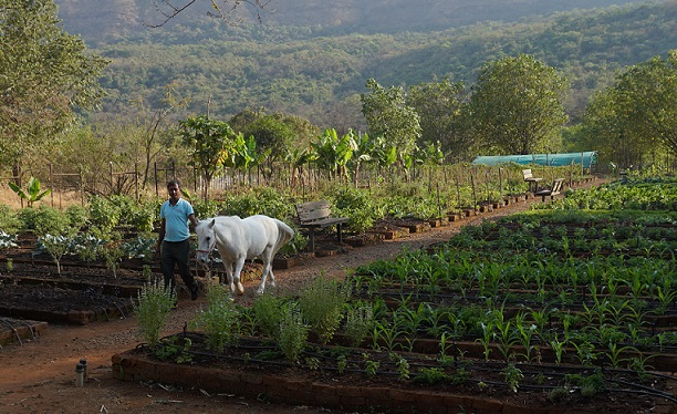 The Organic Farm at Hilton Shillim