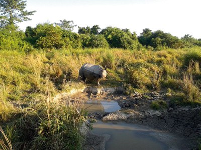 Wildlife on call: Kaziranga National Park, Assam