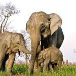 Kaziranga National Park, Assam and Meghalaya