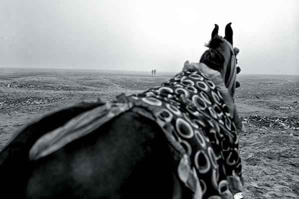 An Equus way to look, Varanasi