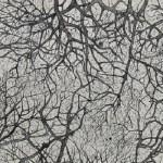 Artwork by Adip Dutta for By Darkling Ground at Experimenter, Kolkata