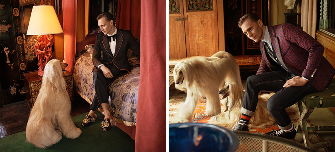 Tom Hiddleston for Gucci