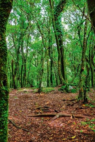 Mawphlang's sacred groves