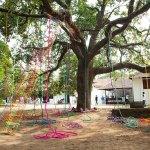 Santha K.V., Tree of life