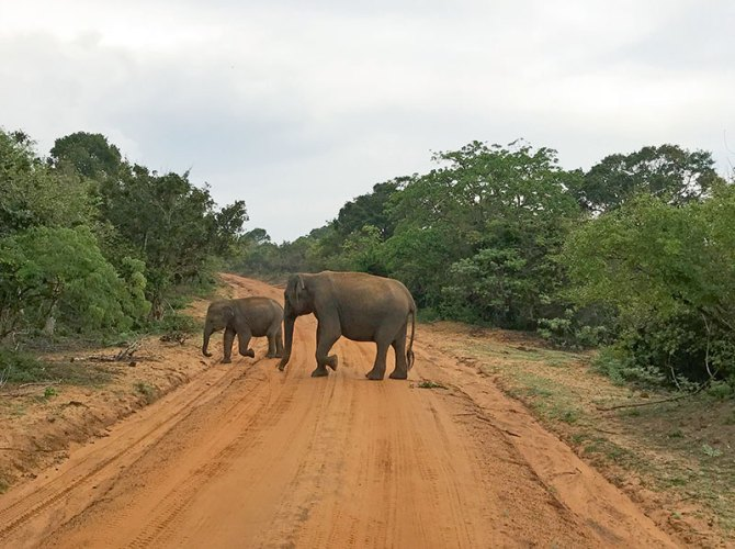 Safari at Yala National Park