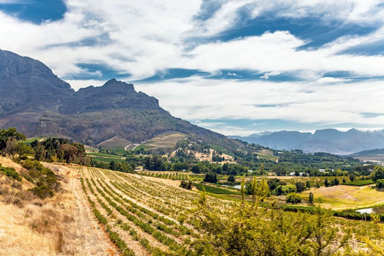 Stellenbosch wine route vista