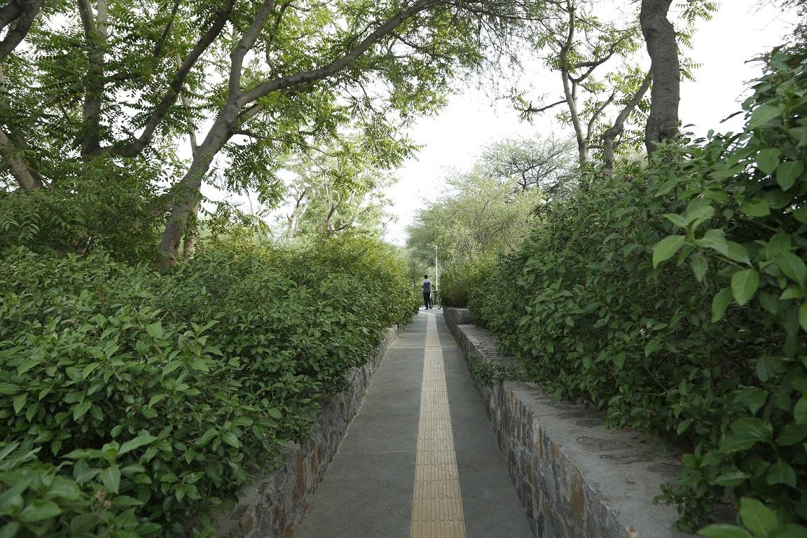 accessible open spaces, Ambika Agarwal, citizen-led initiative, city planning, fastest-growing Indian cities, Featured, green spaces in Delhi, Gurgaon, Gurugram, IAmGurgaon, Latika Thukral, no-plastic initiatives, Online Exclusive, reforestation, Sikanderpur dump yard, Swanzal Kak Kapoor, unplanned development, urban jungles, vilayati kikar, voluntary organisations, Wazirabad-Chhakarpur Bundh, women-led initiatives