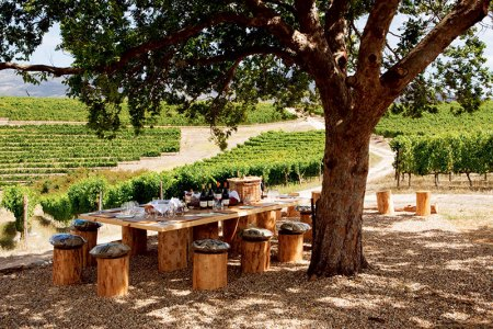 Picture-perfect vineyard