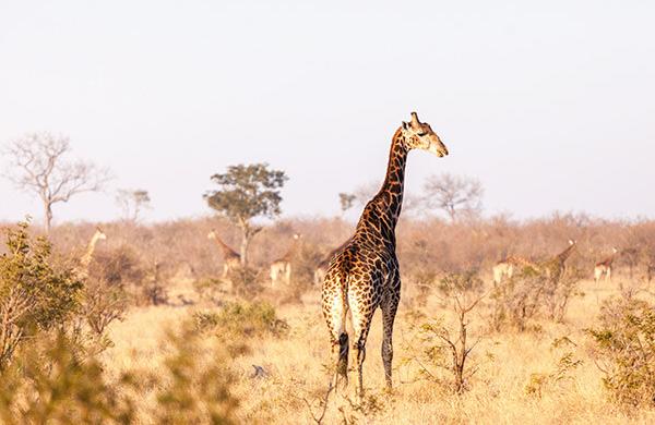 Imbali-Safari-Lodge-kruger-01