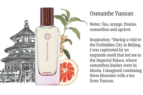 Osmanthe Yunnan1