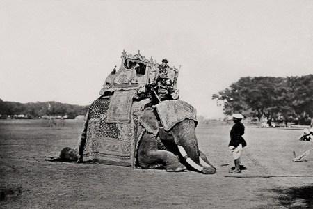 Delhi, His Eminence, The Viceroy's Elephant, Delhi Durbar