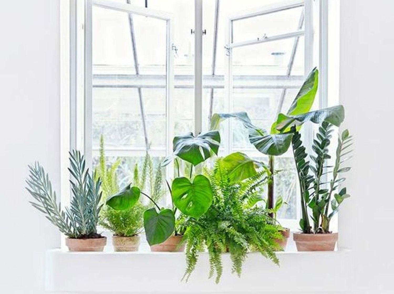 Earth day, plants, indoor plants, interior tips