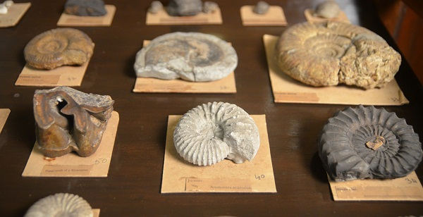 Fossil Specimens from the Museum Collection