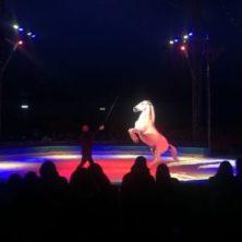 circo, Lidia Togni, Vinicio Togni, cavalli, animali