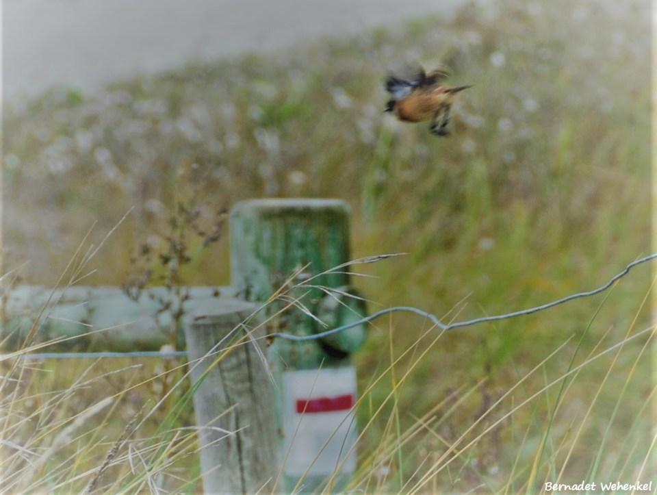 Vogeltje in de vlucht
