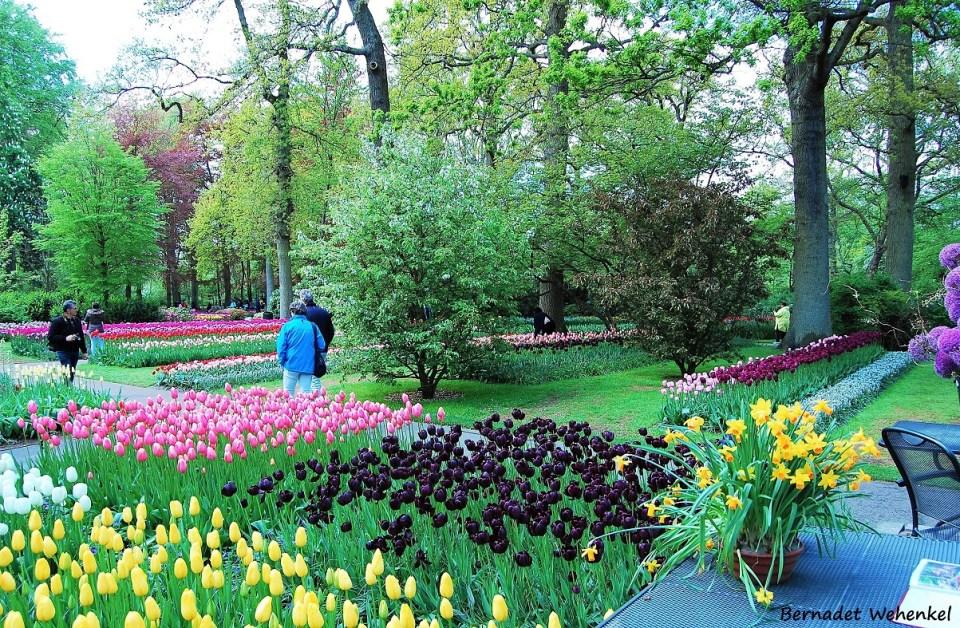 Tulpen en narcissen in kleurrijke vakken.