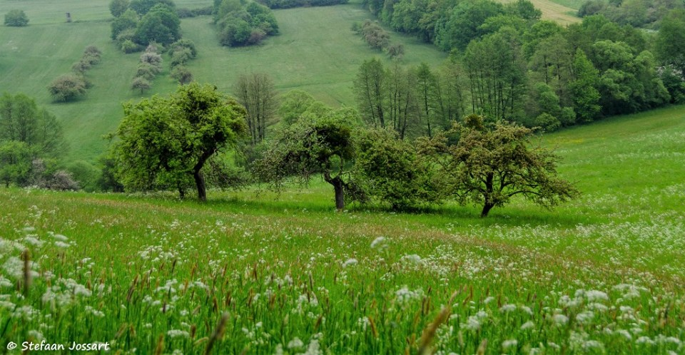 Fruitbomen in de heuvels van Wadern.