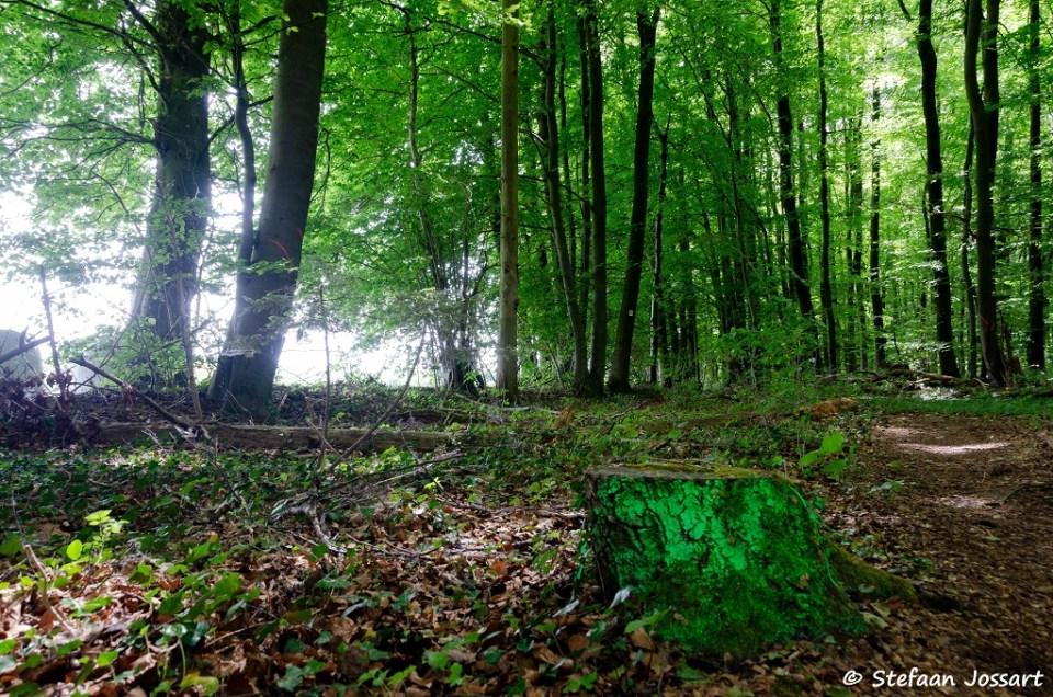 Villa Borg Trail