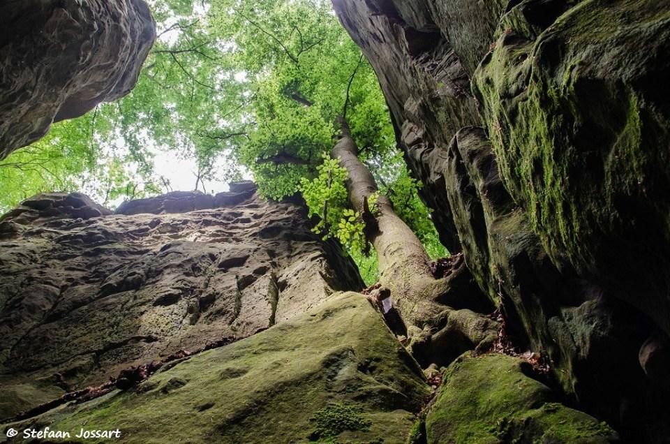 Koude, steile rotswanden en boven onze hoofden: brede kruinen met frisgroen blad.