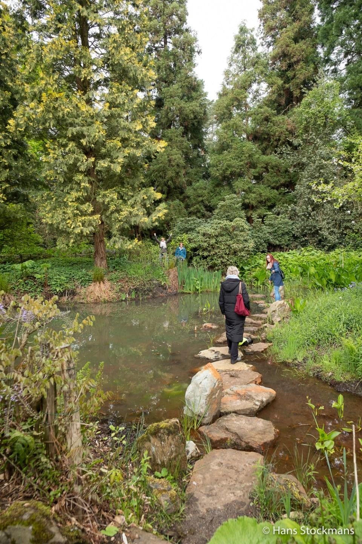 Wandelen door het water in het Arboretum van Bokrijk