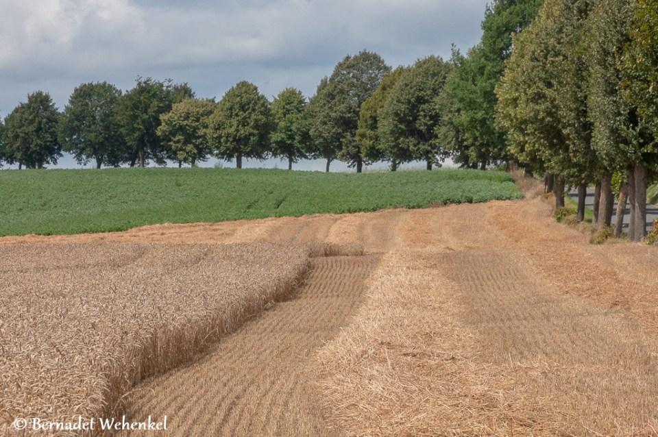 Landschap aan de dreef van het kasteel van Bovelingen.