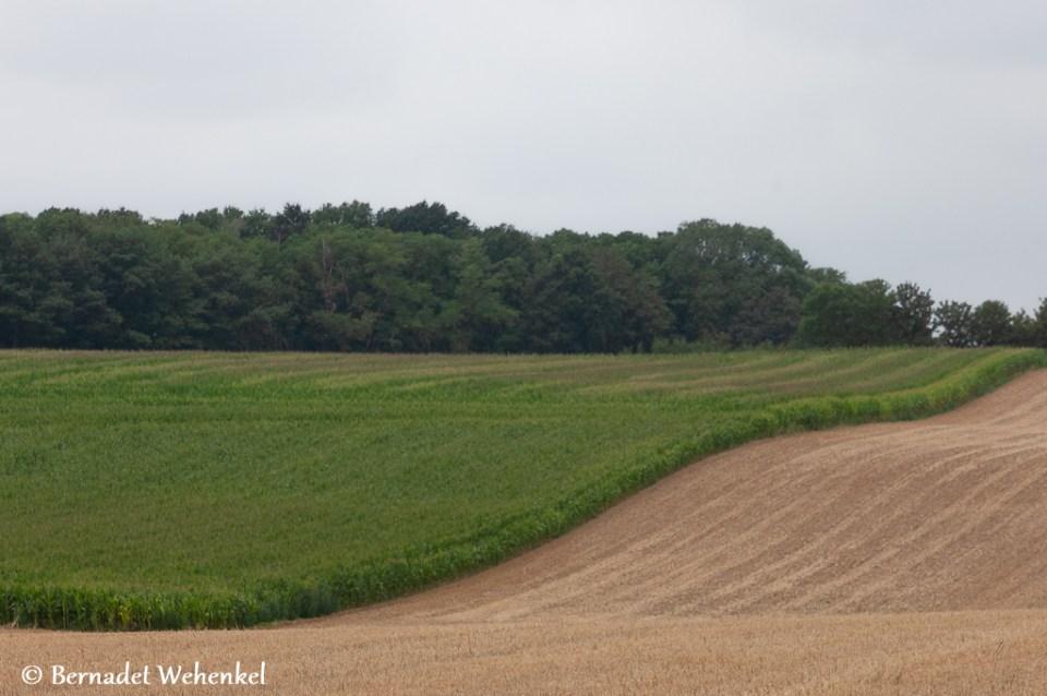 Het glooiende akkerlandschap in Oleye.