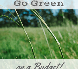 10 Easy Ways to Be Green & Frugal this Spring!